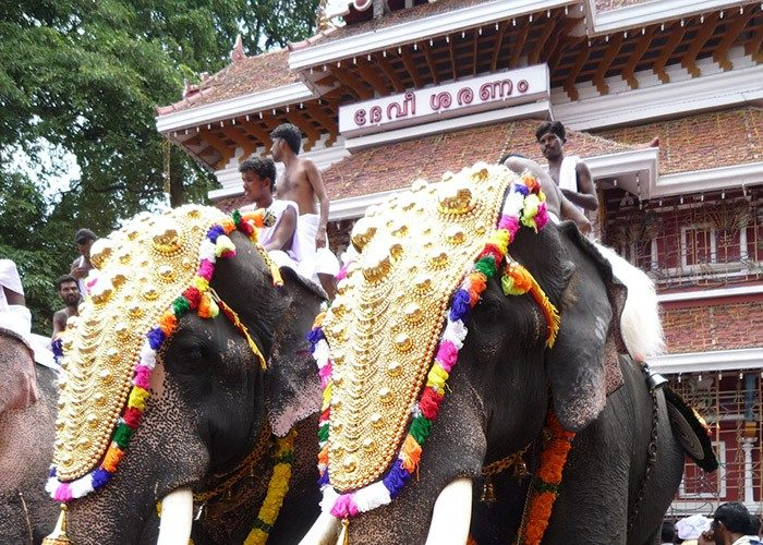 Elephants | Festivals | Kerala | India | Asia