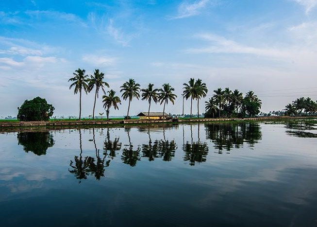Backwater | Kerala | India | Asia
